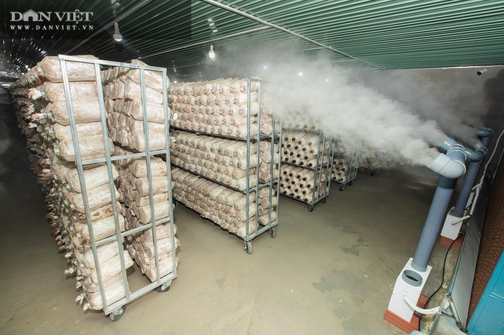 Máy phun sương tạo ẩm cho nấm