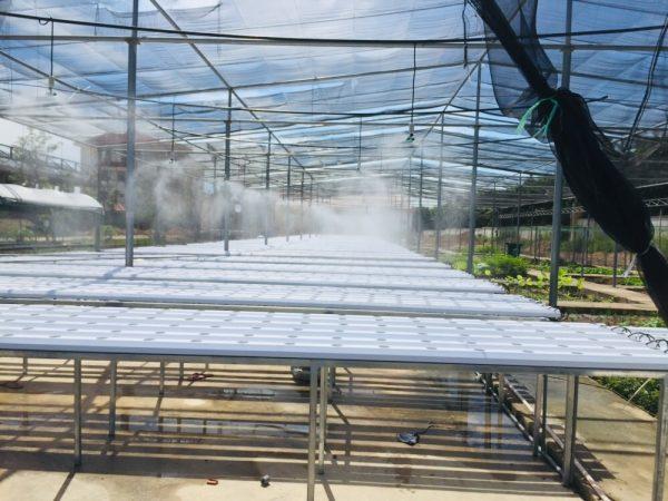 vị trí lắp đặt hệ thống phun sương