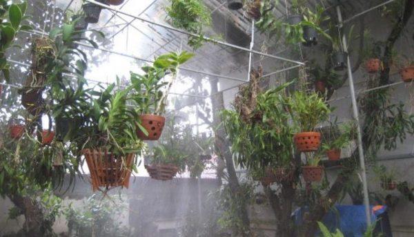 máy phun sương mini trồng lan